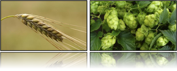 Barley and Hops